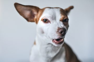 dogs seizures guide