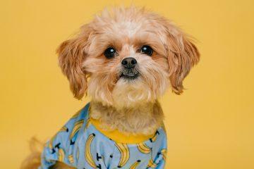 hemp terpenes benefits for dogs